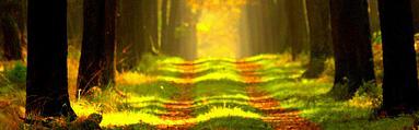 forest_trail_wn.jpg