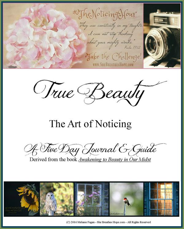 The_Art_of_Noticing_Ebook_Journal_Cover_Framed_.jpg