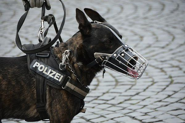 , Working 9-5 or night shift, Fido? A Day in the Life of a Police Dog