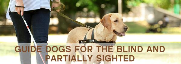 , Dogs can be super guides too!