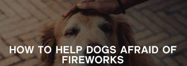 , Is Your Dog Afraid of Fireworks? Read this…