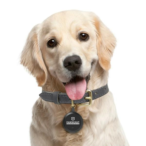 , 5 Best GPS Dog Trackers
