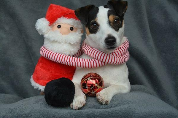 , What's Your Christmas Gift for Your Dogs?