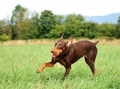 , 5 Best Dog Toys! Get them here