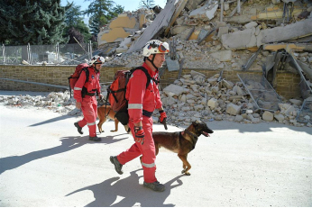 , Why are search and rescue dogs so important?!