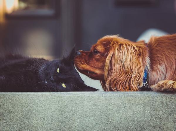 cat-kitten-dog-puppy-wallpaper-preview.jpg