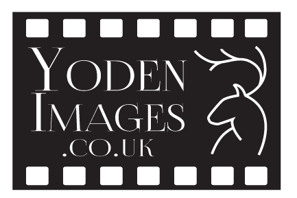 Yoden images Logo-02.png