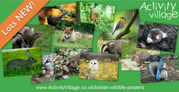 Lovely new photographic posters of British Wildlife
