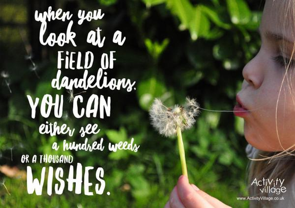 When you look at a field of dandelions ...