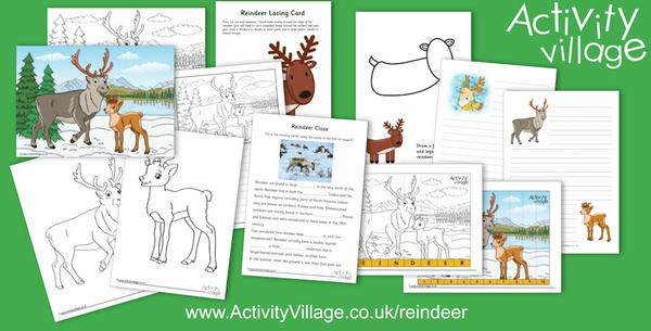 New reindeer activities