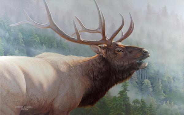Misty Mountain Challenge - Derek C Wicks