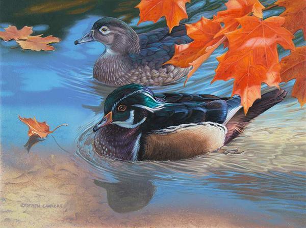 Autumn Stroll - Derek C wicks