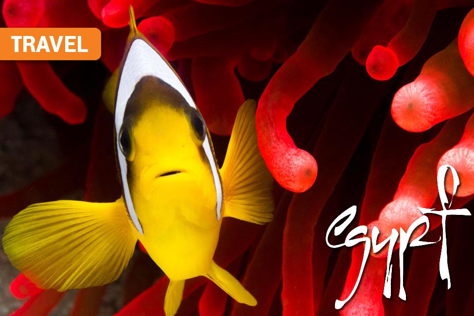 Egypt Marine Life