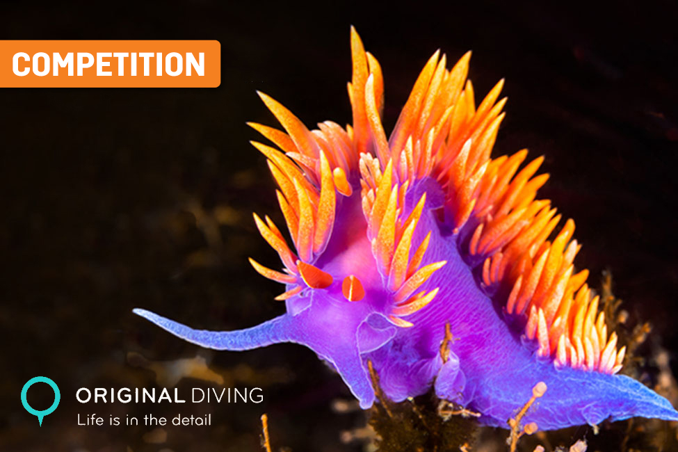 Original Diving Competition