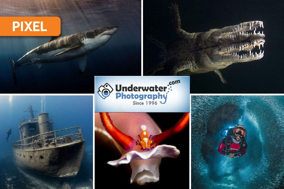 Underwater Photography Winners