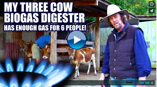Three Cow BioGas System