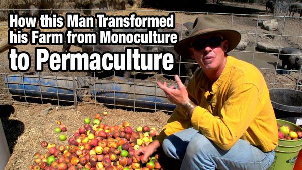 From Monoculture to Permaculture