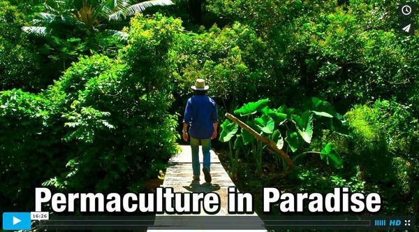 Permaculturein Paradise