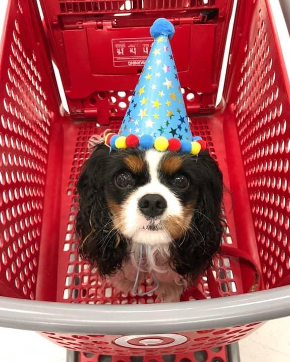 Augie's 1st birthday