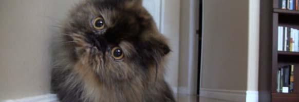 Cat On Camera