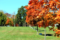 Ozarks_most_prevalent_trees