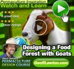 Designing a Food Forest with Goats