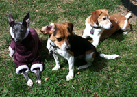 Left to Right: Nubi, Cleo and Lucy